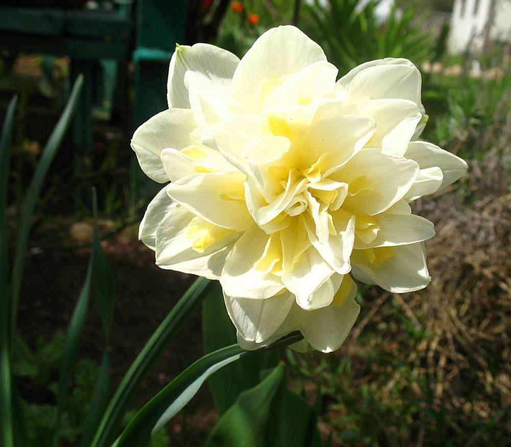 Белый цветок на высоком стебле