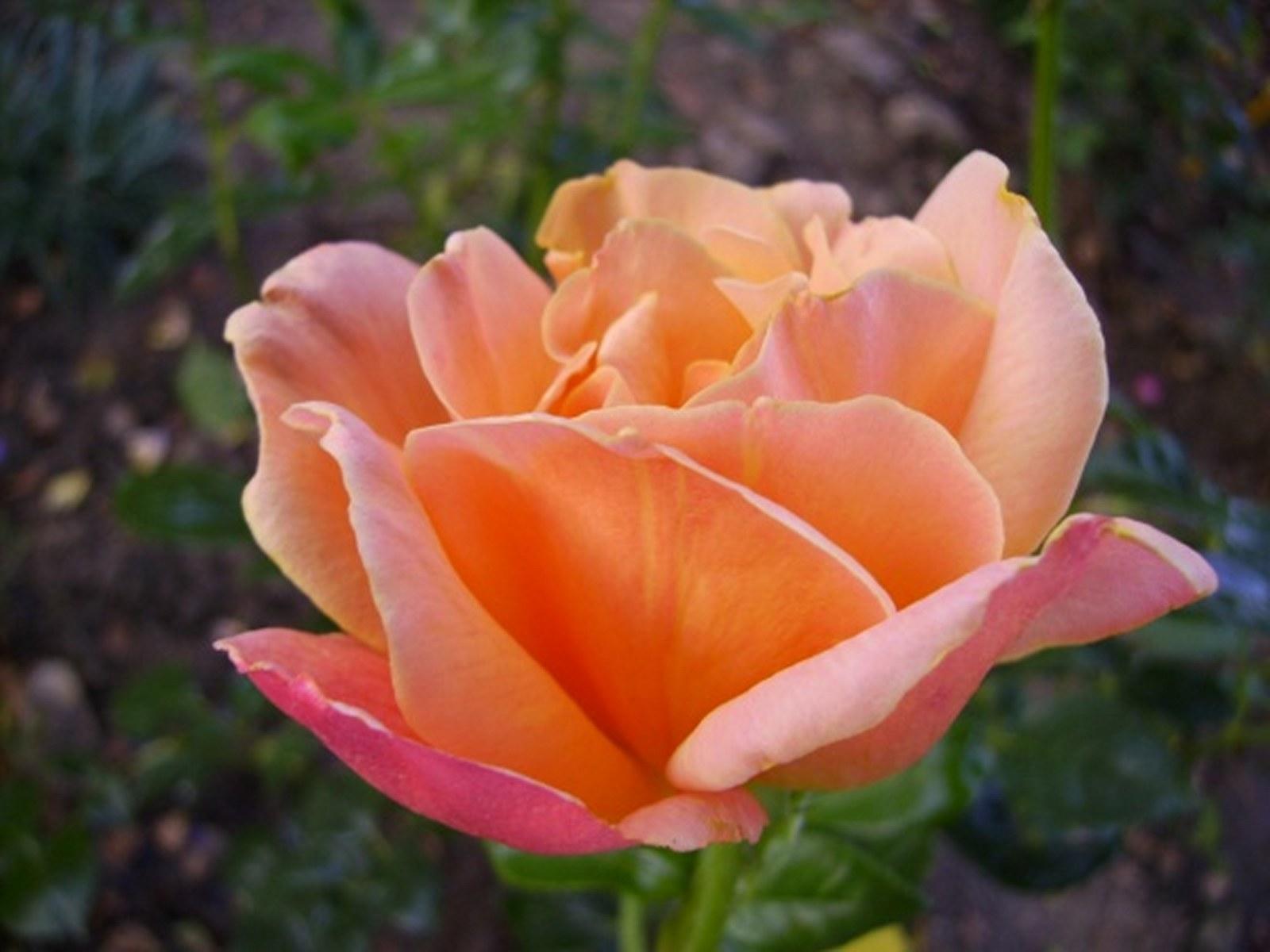 роза луи де фюнес картинки знал, что она