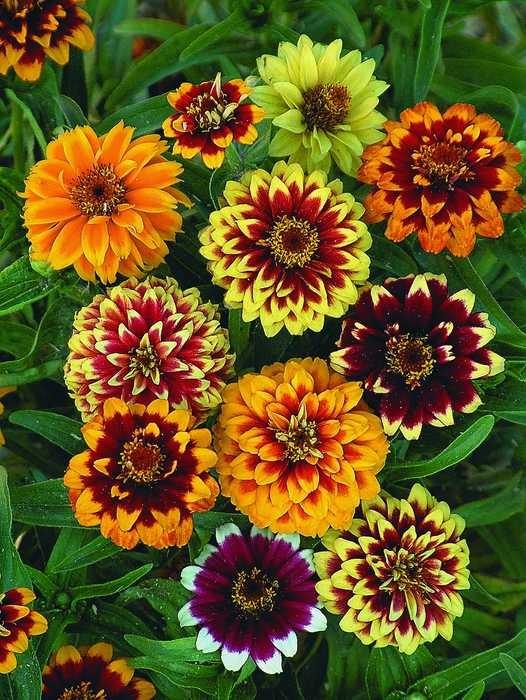 Все семена цветов фото