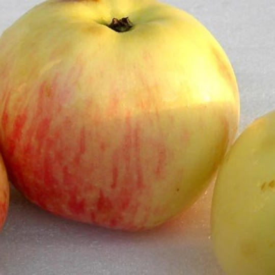 ренет татарский яблоня фото скоро положу туда