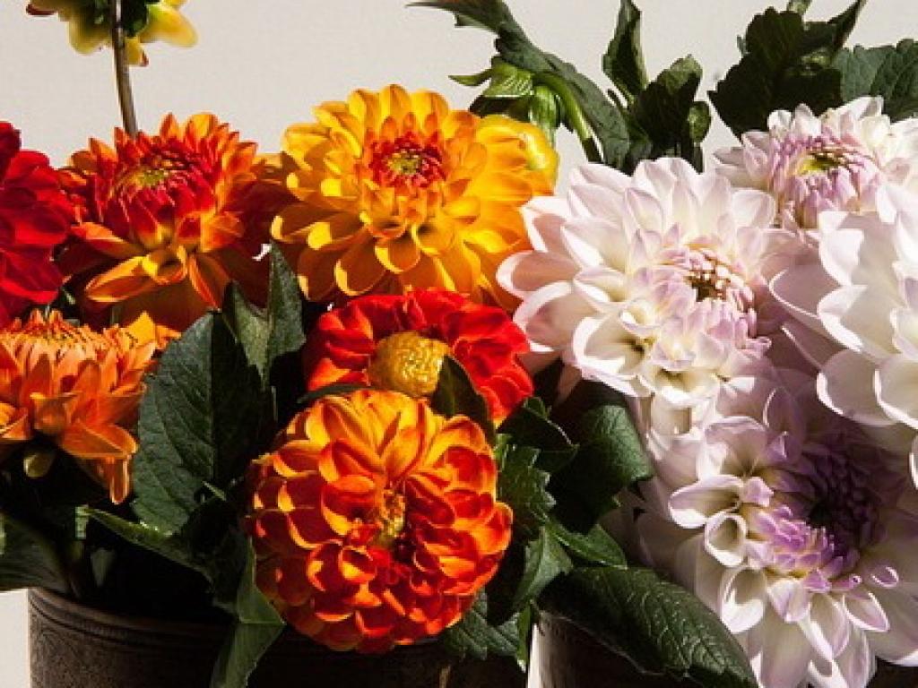 Клубнелуковичные растения