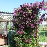 Daylily Rose Corsage