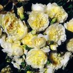 Розы Перпетуалли Ерз
