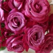Розы Лила Вандер