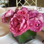 Розы Ив Пиаж