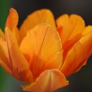 Оранж Принцесс