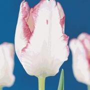 Тюльпаны Гарден Бьюти