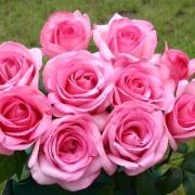 Розы Свит Пароле