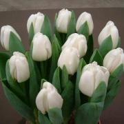 Тюльпаны Антарктика