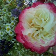 Розы Дабл Делайт