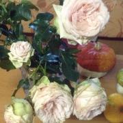 Розы Лакре