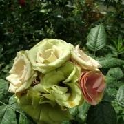 Розы Гринсливз