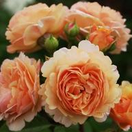 Интересные статьи о садоводстве: полезные советы садоводам России