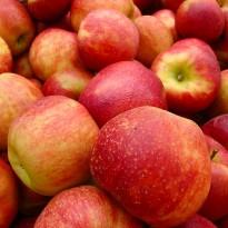 Яблоня зимняя Джонаголд