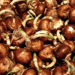 Паста с креветками в сливочно-чесночном соусе рецепт пошагово