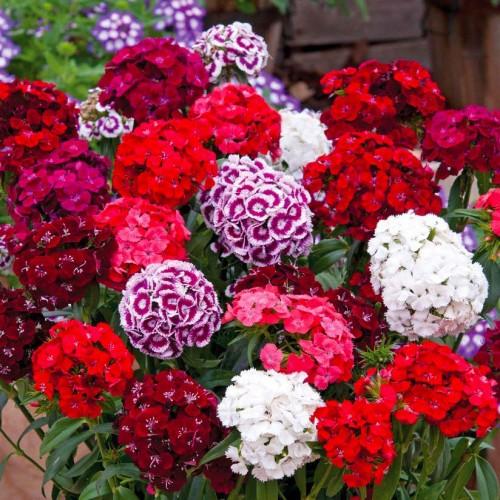 Купить цветы через почту беларусь купить искусственные цветы по интернету в казахстане