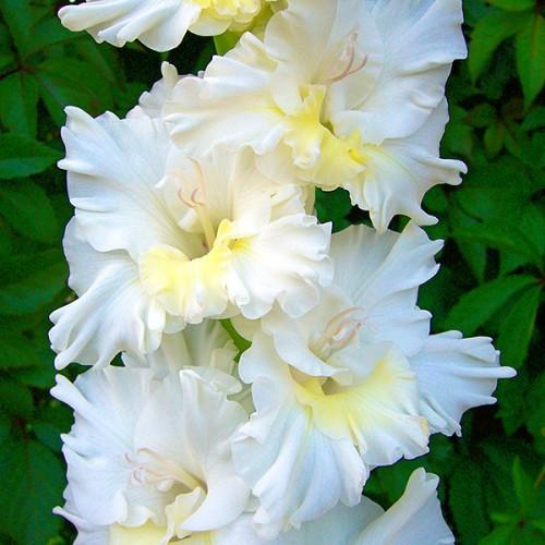 Про цветок бай каталог