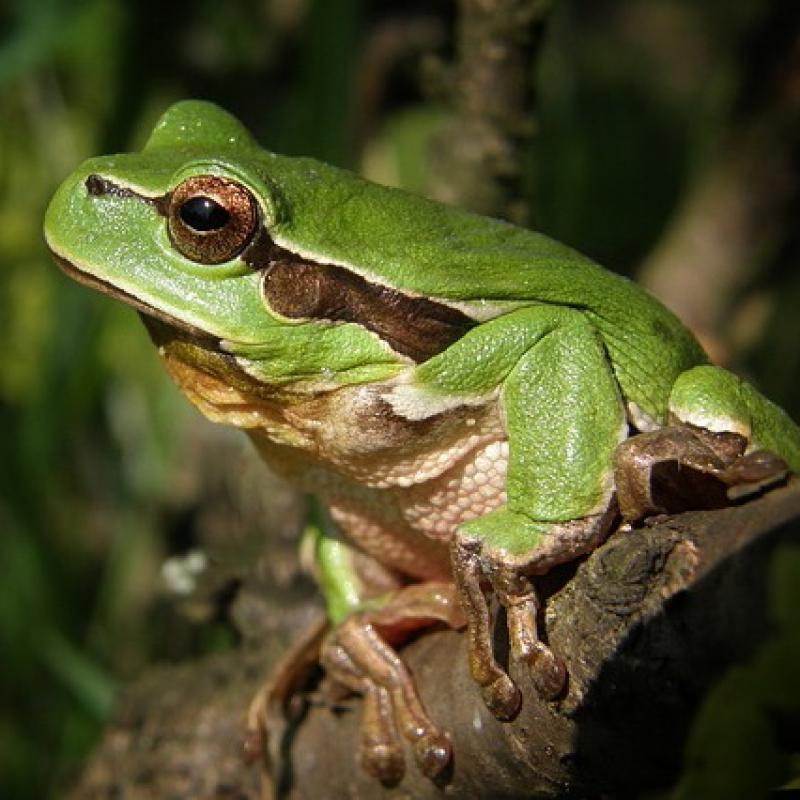 Вопрос-ответ На даче много лягушек. Есть ли от них польза?