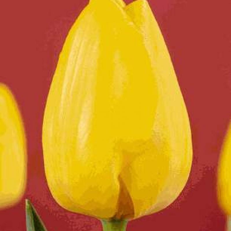 Тюльпаны Палм Бич