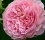 Роза Леандр